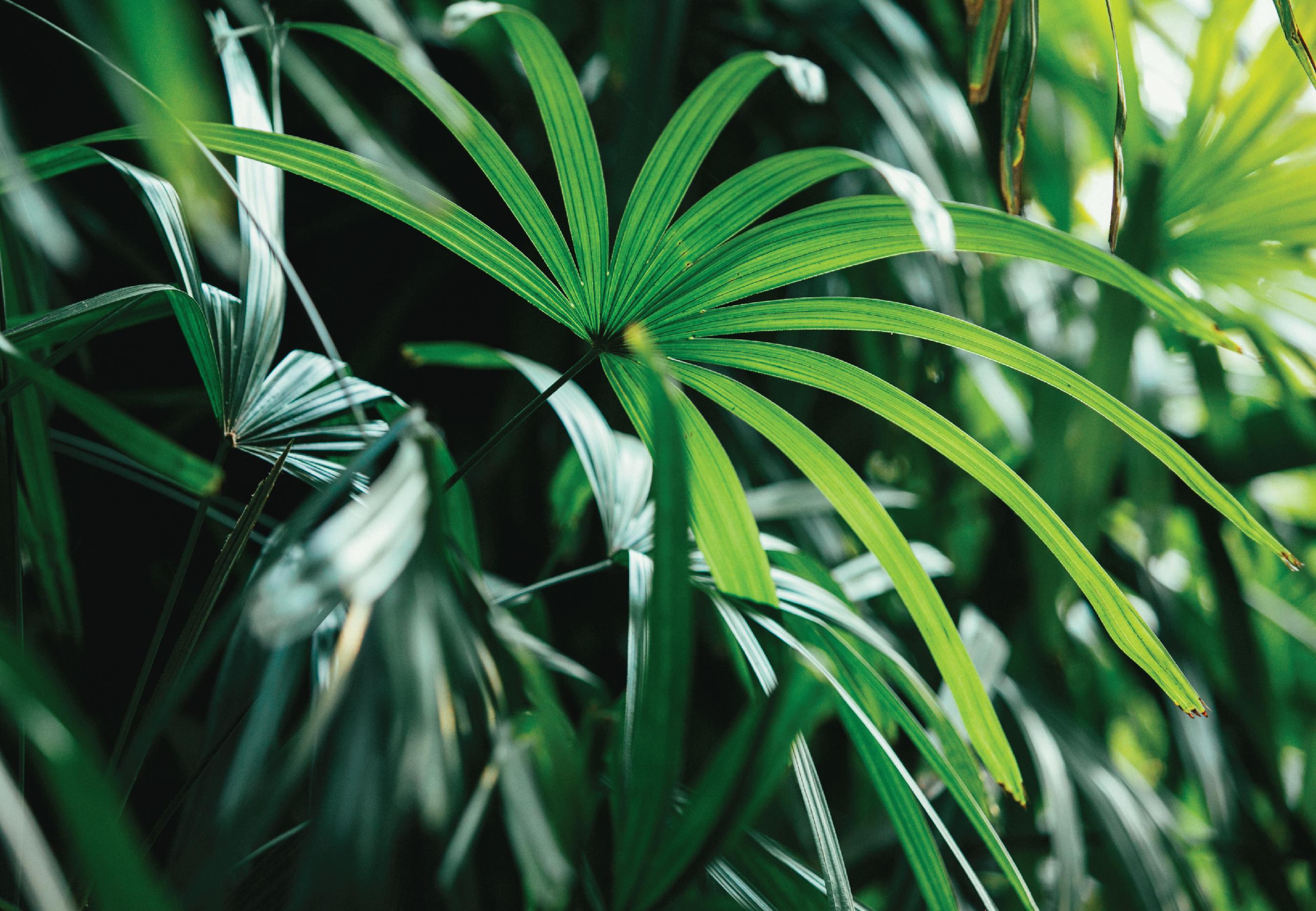 kishboo_swayme jungle-15